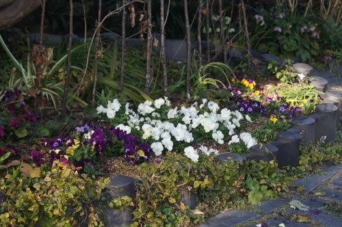 早春の庭_e0181373_21164841.jpg