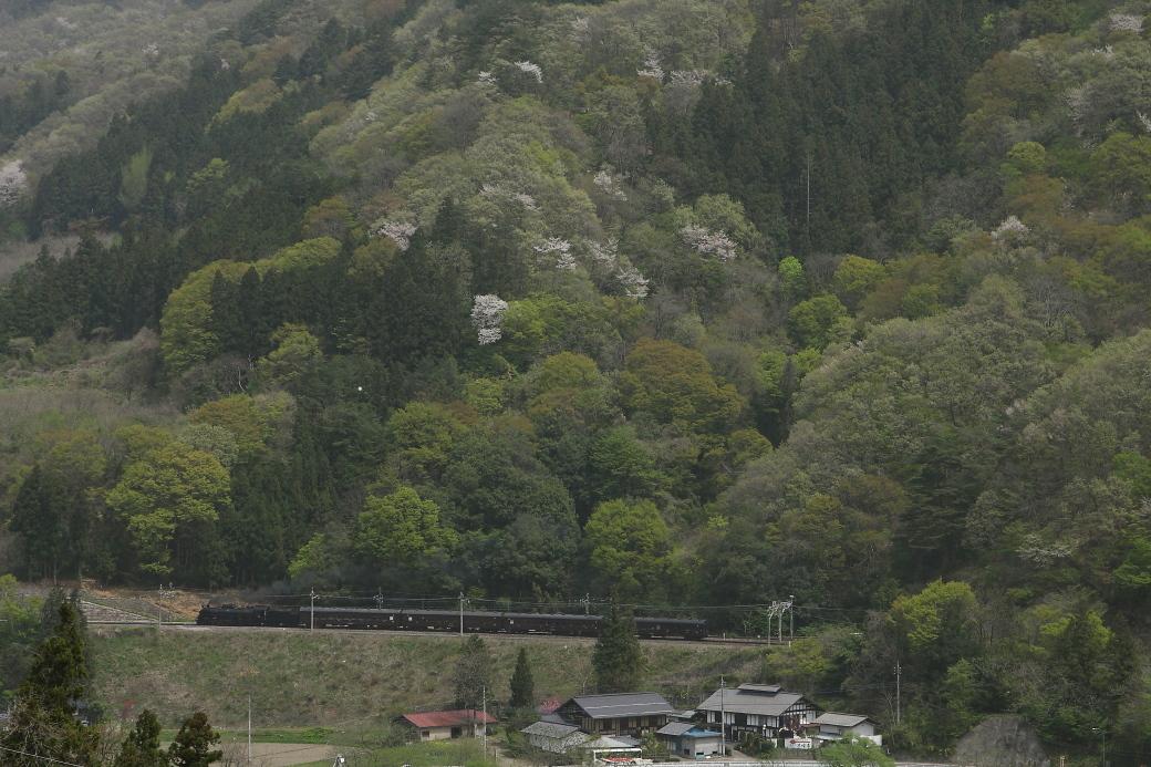 新緑、山桜、薄煙 - 上越線 -_b0190710_19044149.jpg
