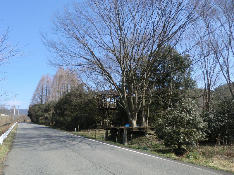 工事途中のツリーハウス?_b0131012_1625385.jpg