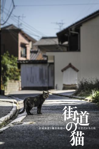 [猫的]街道の猫_e0090124_09195214.jpg
