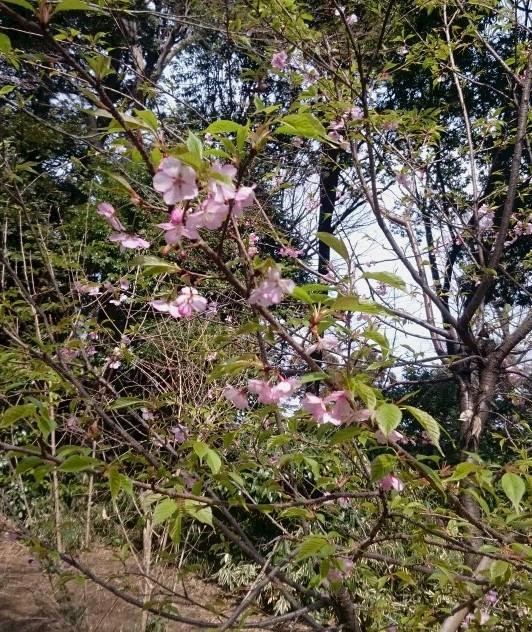 春を見つけに行きました_d0155439_16371958.jpg