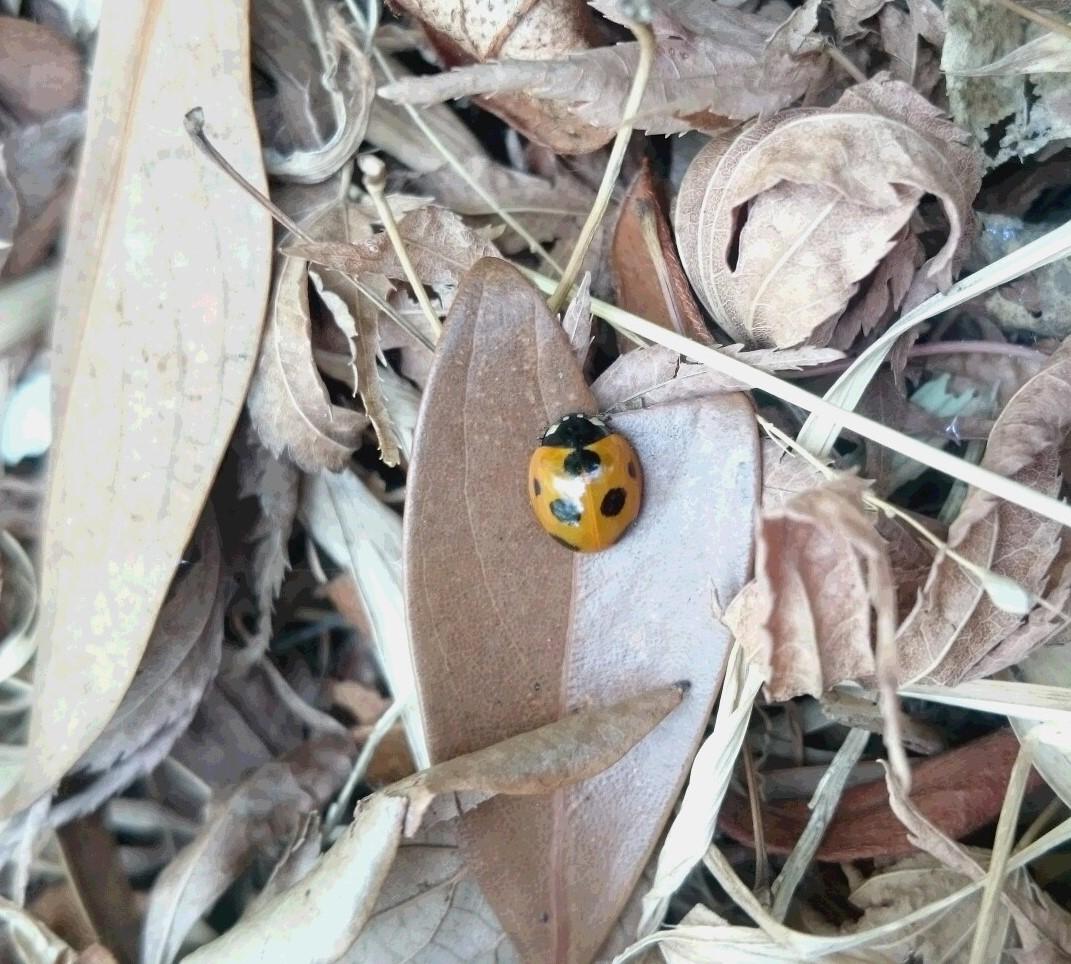 春を見つけに行きました_d0155439_16444869.jpg