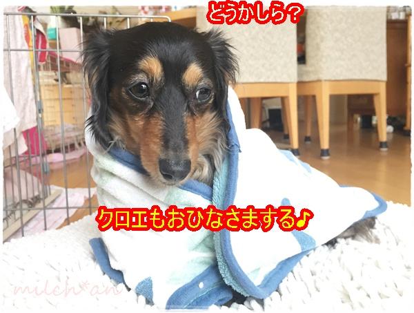 b0115642_17501883.jpg