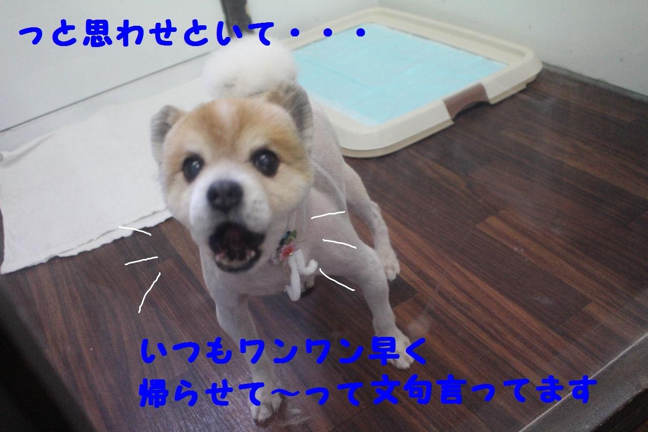 b0130018_10593401.jpg