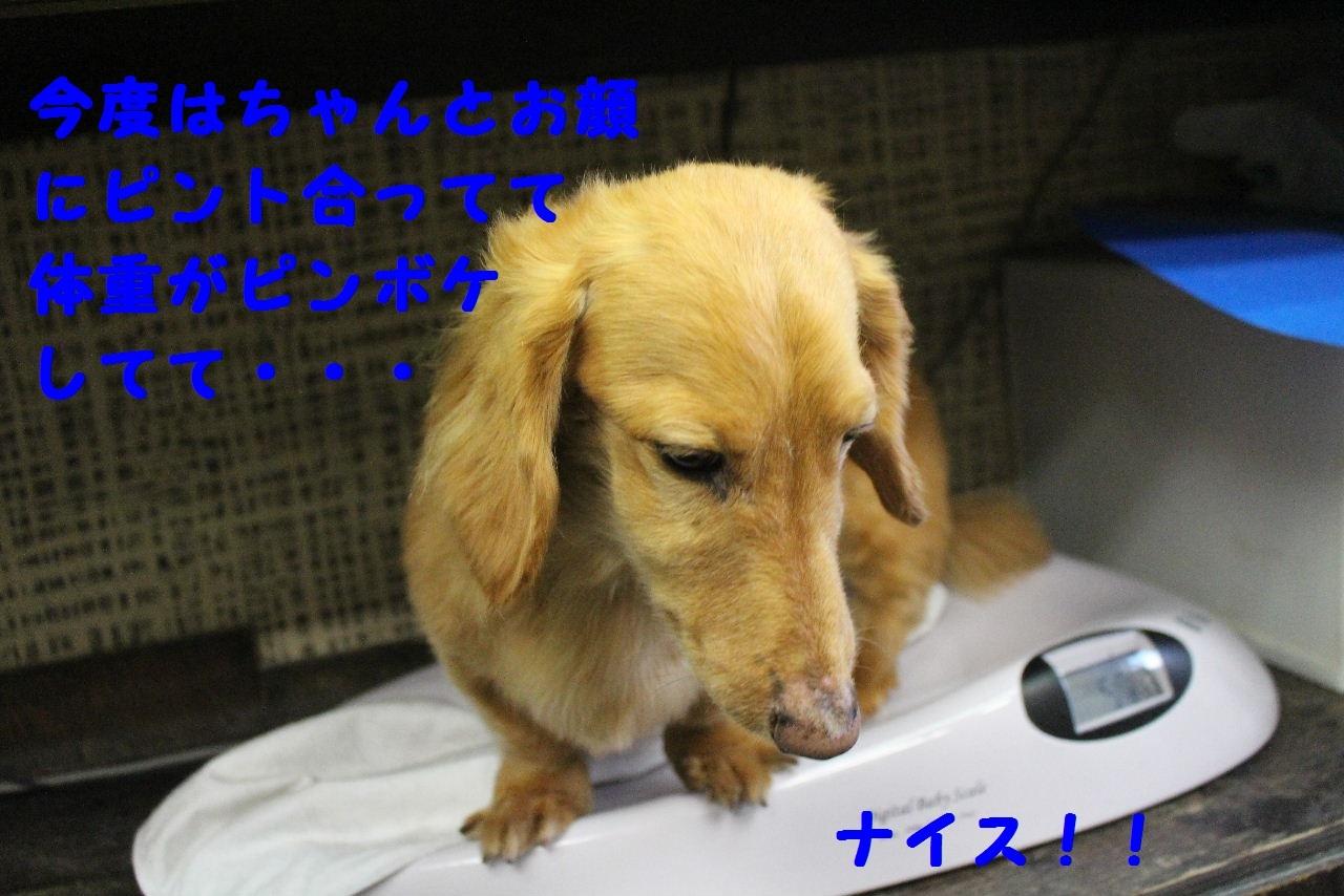 b0130018_11082402.jpg