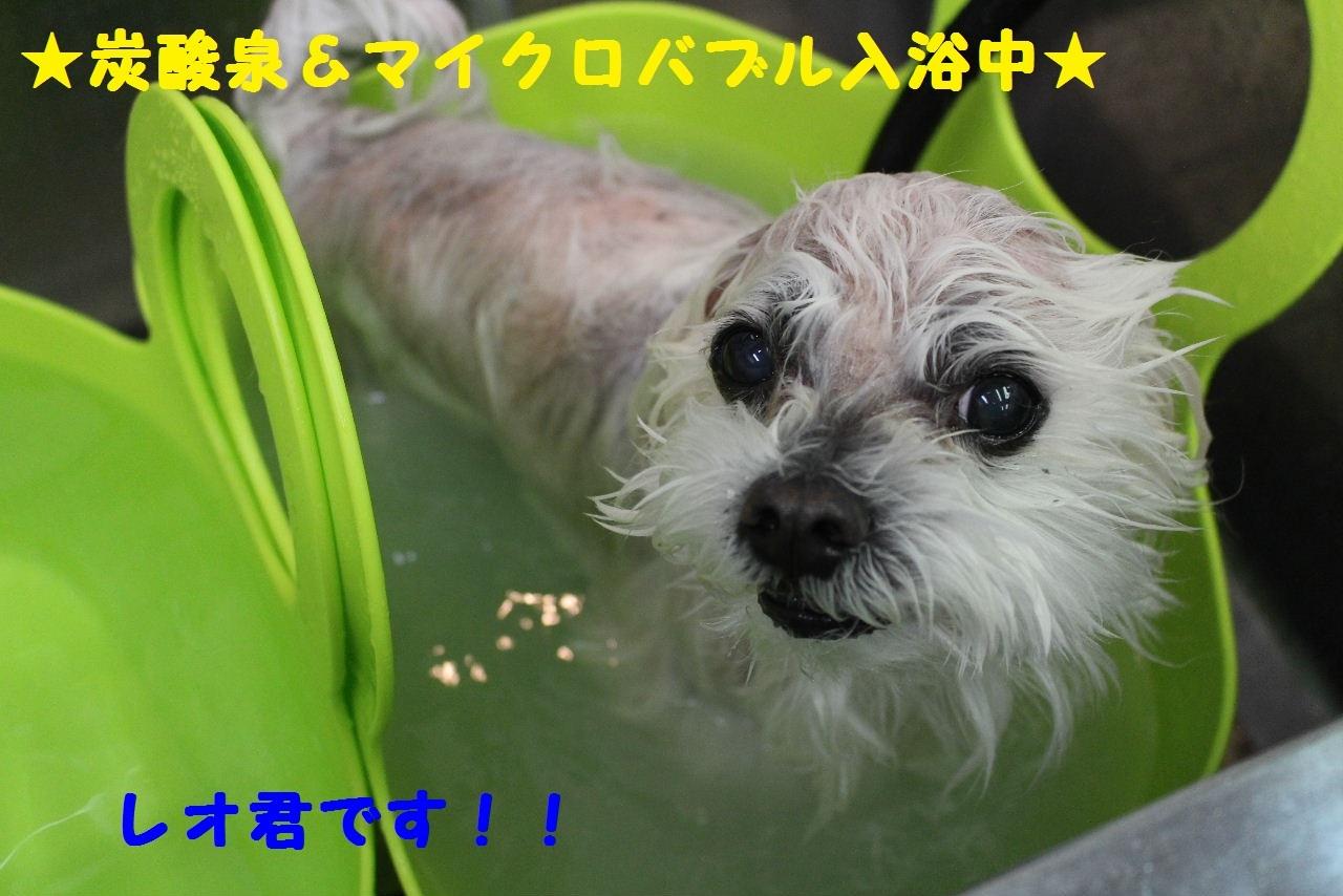 b0130018_17395716.jpg