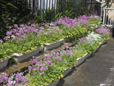 春がやってきた。_e0150006_20084284.jpg