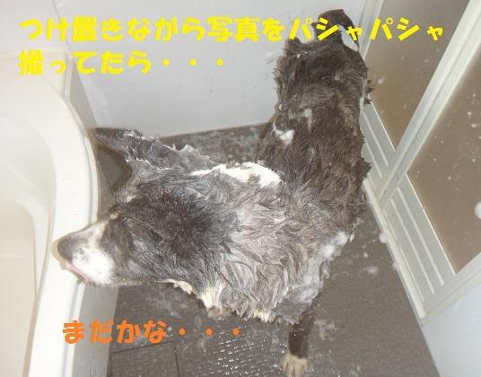 f0121712_14553633.jpg