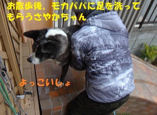 f0121712_16040893.jpg
