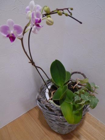 美しいお花が咲いています☆_e0228813_10261682.jpg