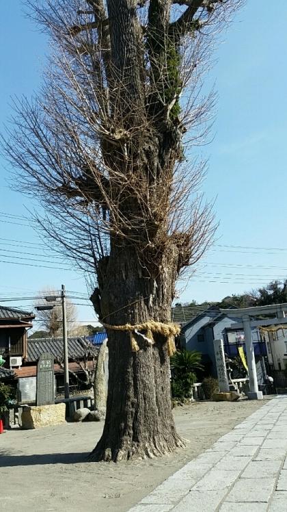 横須賀中央 楽天モバイル店舗 オープン_d0092901_00321544.jpg