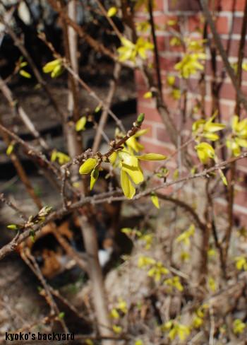 今年もまた「花より団子」なWhitney_b0253205_05055395.jpg