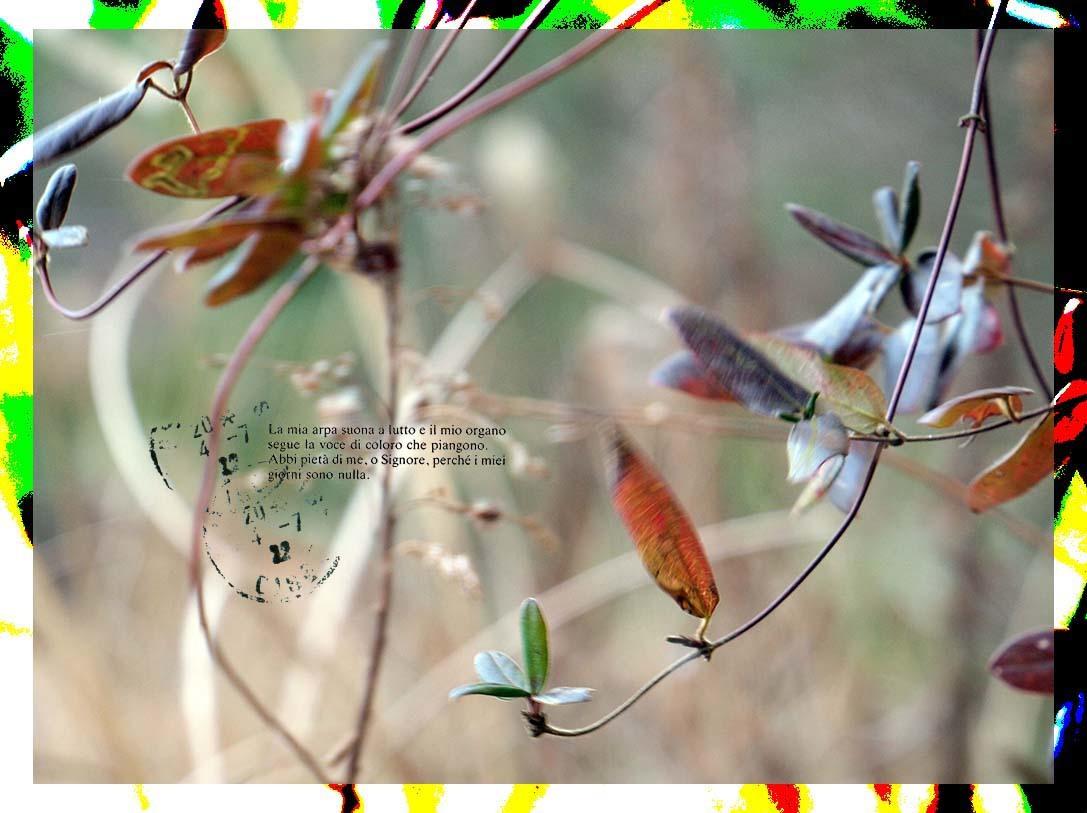 f0198771_23520422.jpg