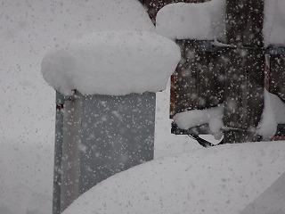 また雪へ_d0122374_2042612.jpg
