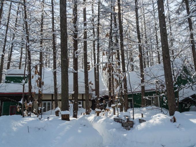 雪のち晴れ・・木の枝で毛づくろいのエゾリス君_f0276498_14315994.jpg