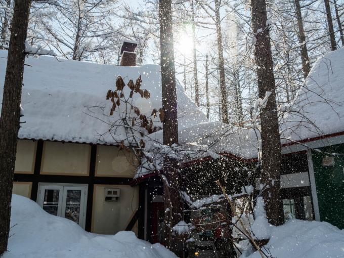 雪のち晴れ・・木の枝で毛づくろいのエゾリス君_f0276498_14330826.jpg