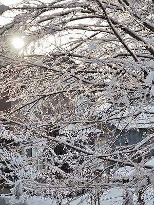 春の雪_c0336902_21252562.jpg
