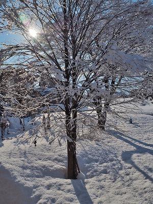 春の雪_c0336902_21253217.jpg