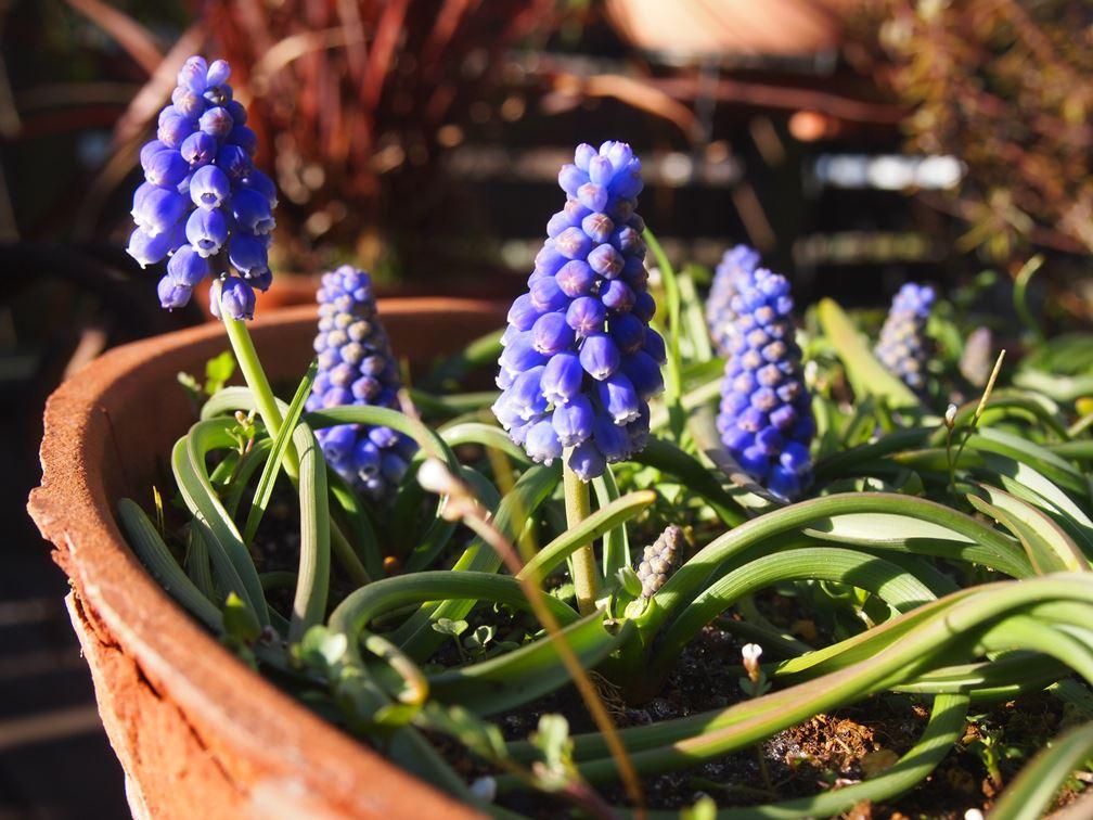 春の気配☆_c0152341_8124358.jpg