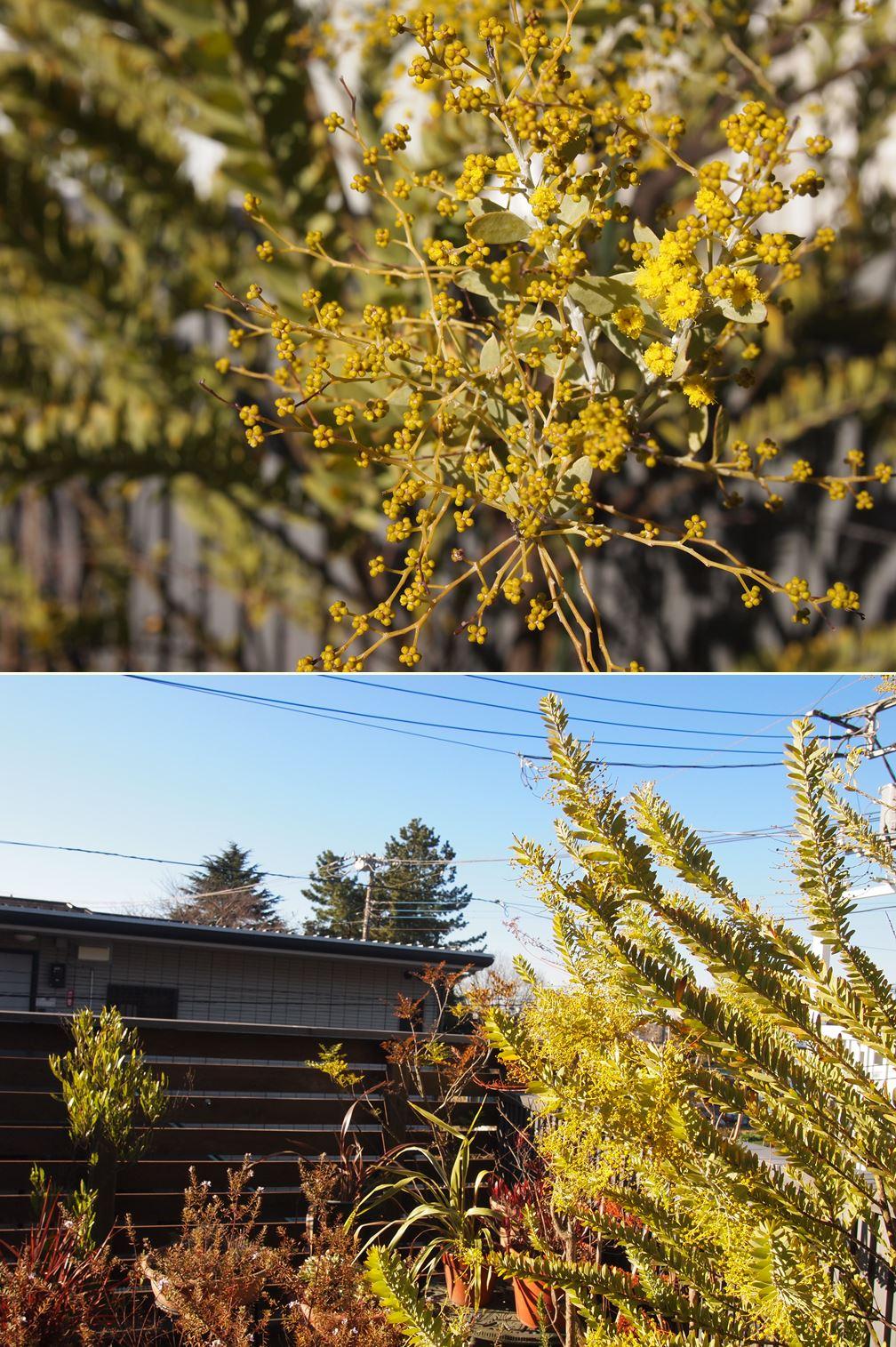 春の気配☆_c0152341_991936.jpg
