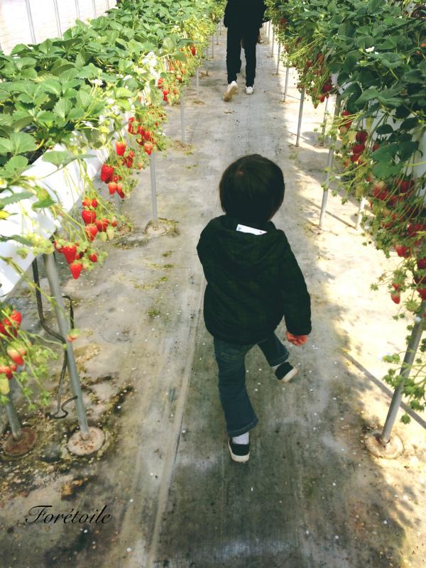 la cueillette des fraises_f0377243_09080969.jpg