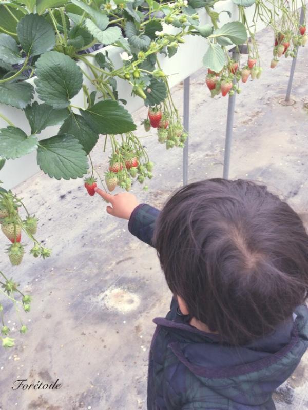 la cueillette des fraises_f0377243_09090128.jpg