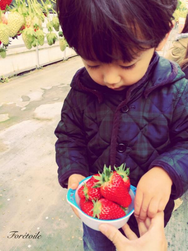 la cueillette des fraises_f0377243_09101953.jpg