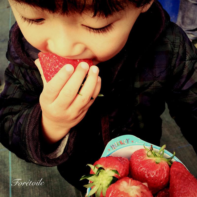 la cueillette des fraises_f0377243_09105632.jpg