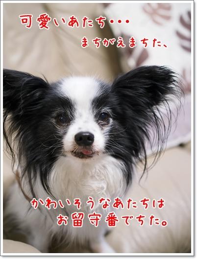 d0013149_00504547.jpg