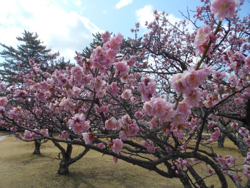 春めいてきましたね♫_f0220087_812085.jpg