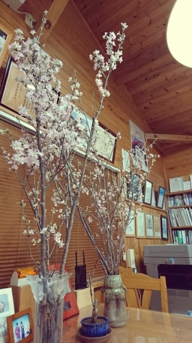 事務所の桜_f0150893_18232064.jpg