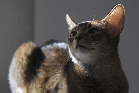 [猫的]横アングル_e0090124_22180778.jpg