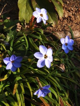春の息吹_b0214473_1712924.jpg