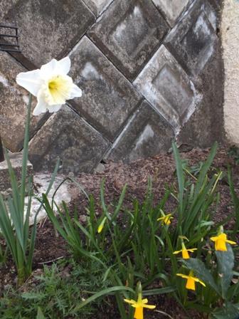 春の息吹_b0214473_17265159.jpg