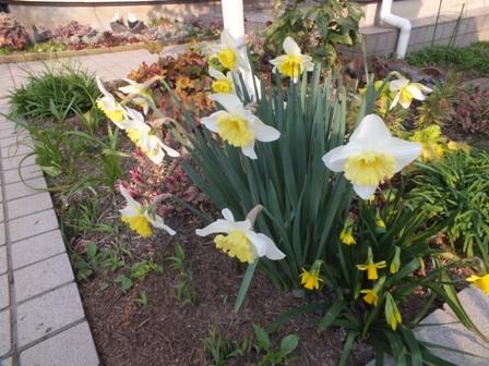 春の息吹_b0214473_1782845.jpg