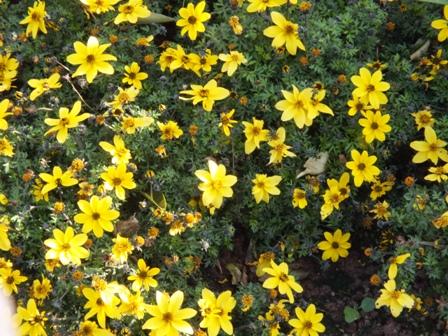 春の息吹_b0214473_1792182.jpg