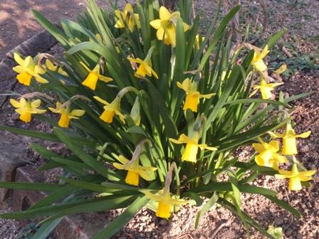 春の息吹_b0214473_179450.jpg