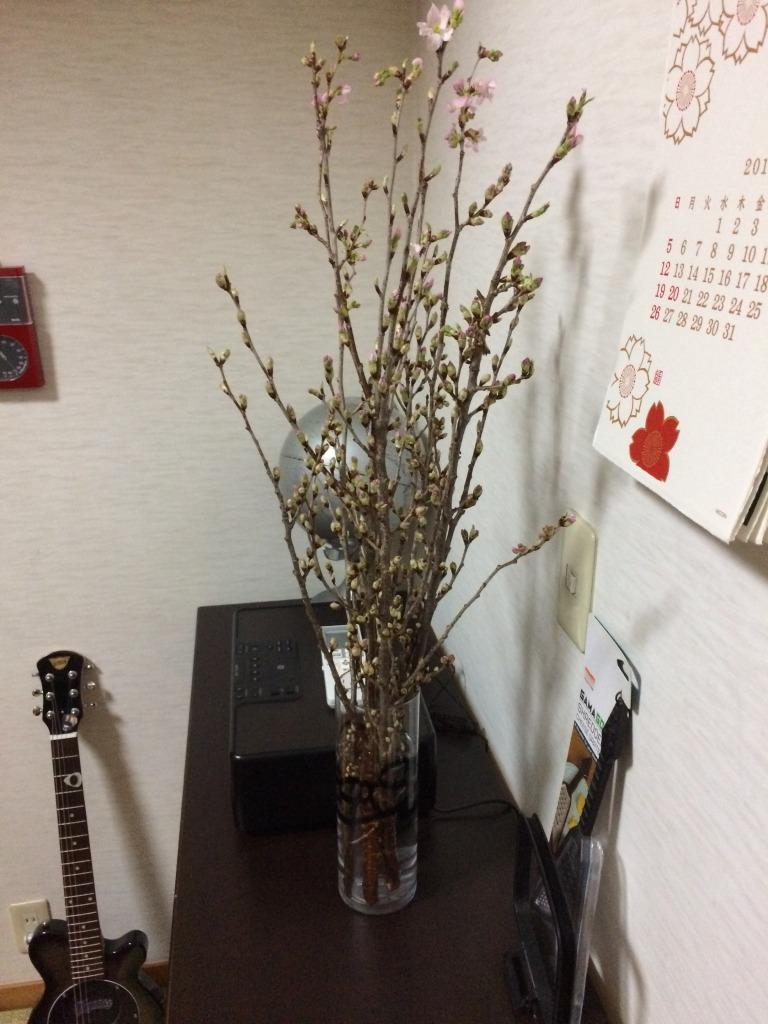 昨日からうちの和室に桜の枝が鎮座!自宅花見と洒落込もう_d0061678_12564789.jpg