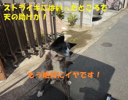 f0121712_01150569.jpg