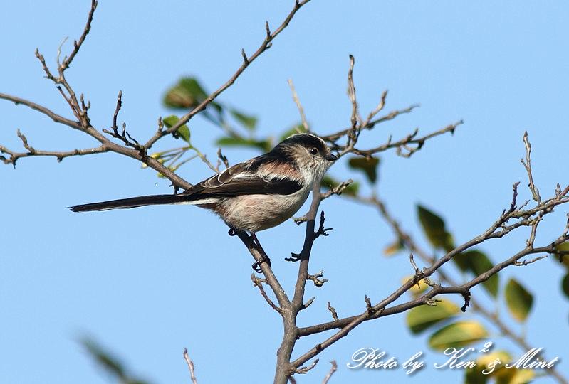 公園で会えた 鳥さんたち♪_e0218518_15091660.jpg