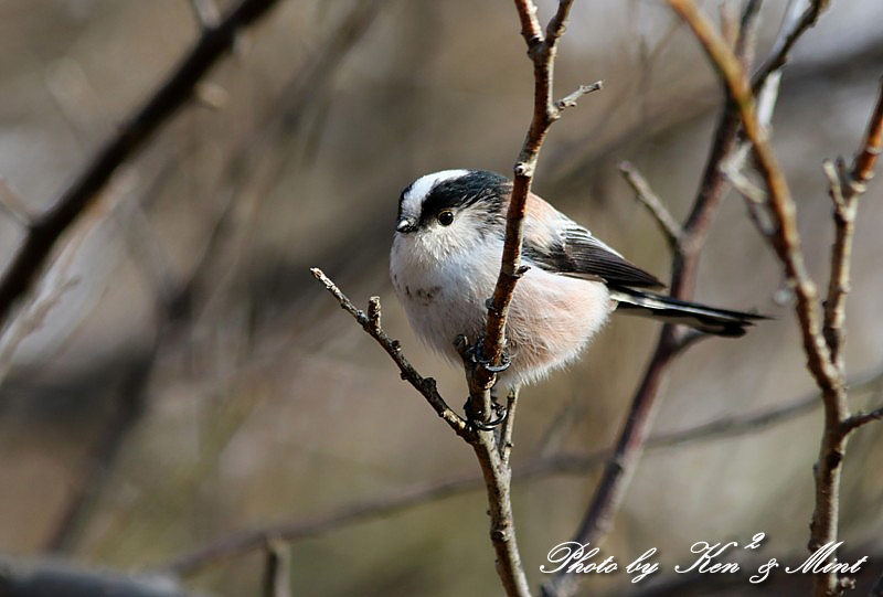 公園で会えた 鳥さんたち♪_e0218518_15093401.jpg