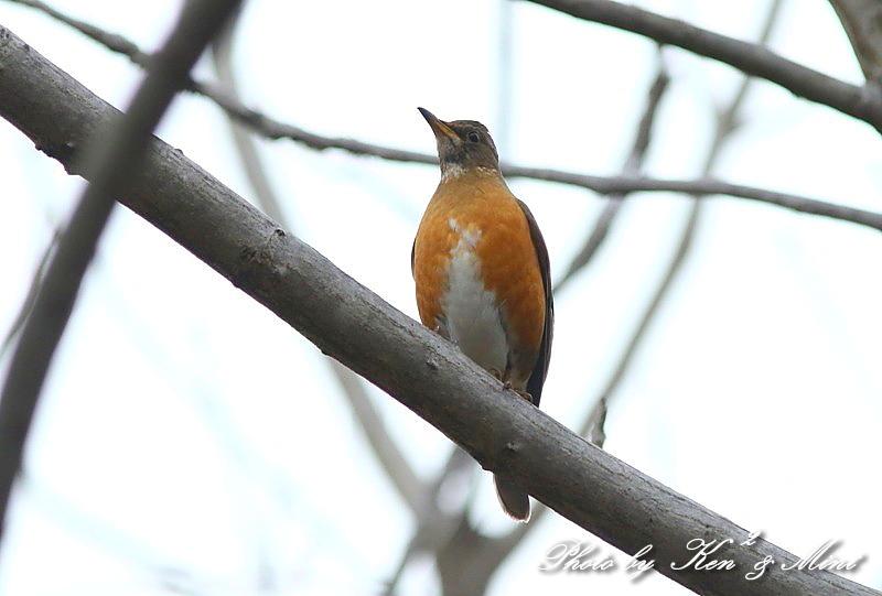 公園で会えた 鳥さんたち♪_e0218518_15100666.jpg