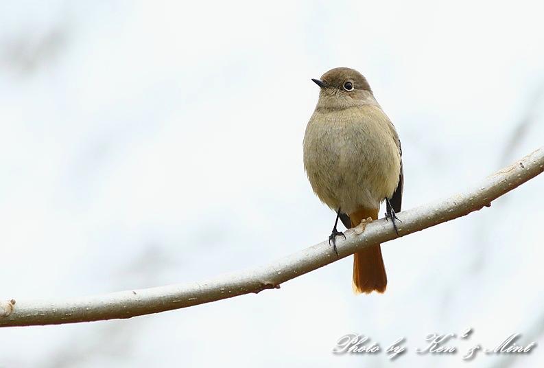 公園で会えた 鳥さんたち♪_e0218518_15103157.jpg