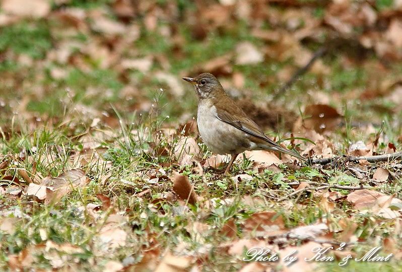 公園で会えた 鳥さんたち♪_e0218518_15105235.jpg