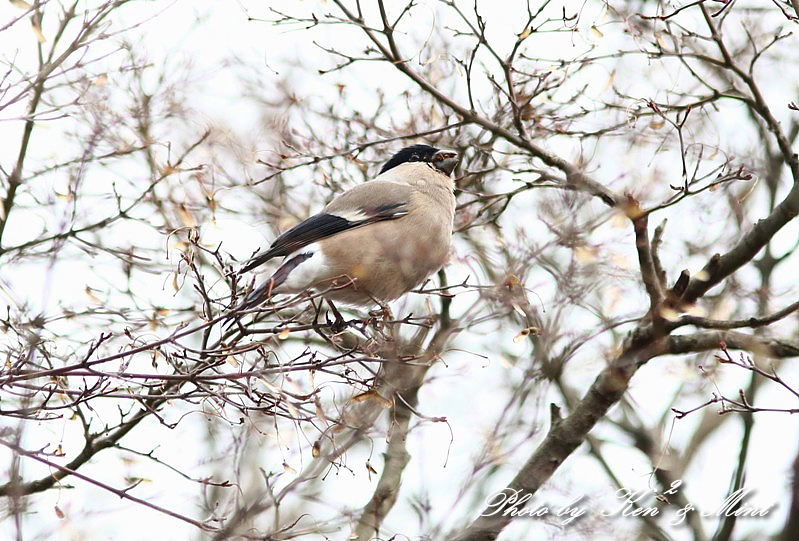 公園で会えた 鳥さんたち♪_e0218518_15111841.jpg
