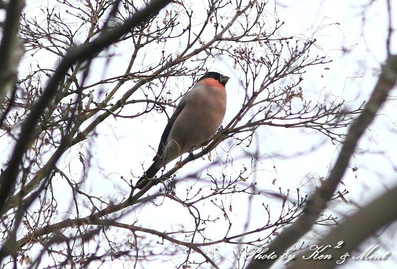 公園で会えた 鳥さんたち♪_e0218518_15114219.jpg