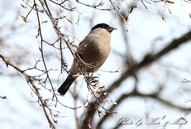 公園で会えた 鳥さんたち♪_e0218518_15120189.jpg