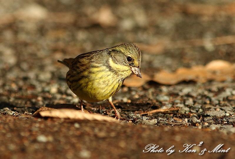 公園で会えた 鳥さんたち♪_e0218518_15123031.jpg