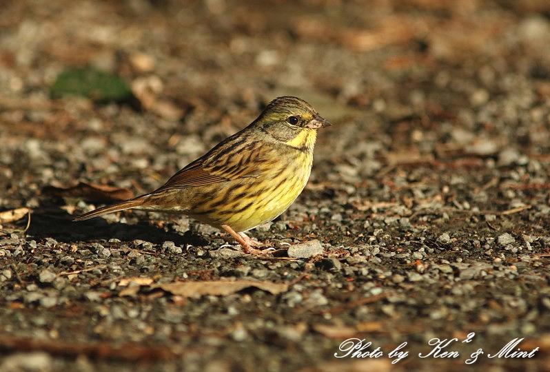 公園で会えた 鳥さんたち♪_e0218518_15124991.jpg