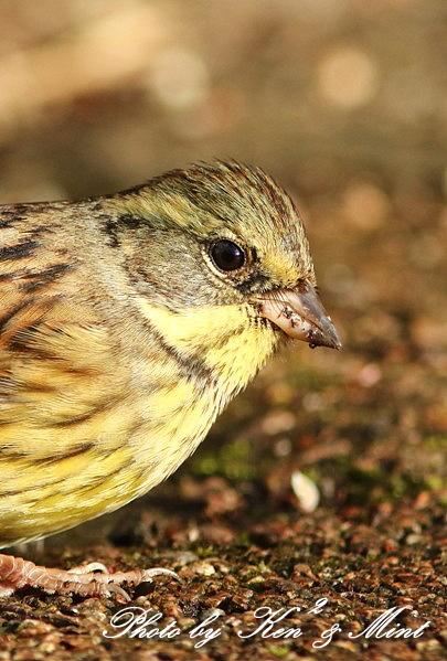 公園で会えた 鳥さんたち♪_e0218518_15132277.jpg